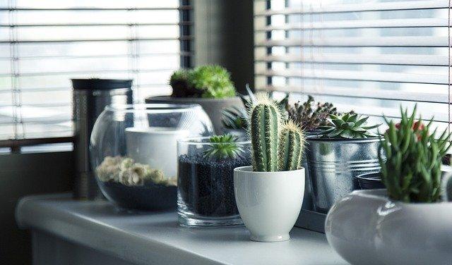 kaktusy na parapetu.jpg